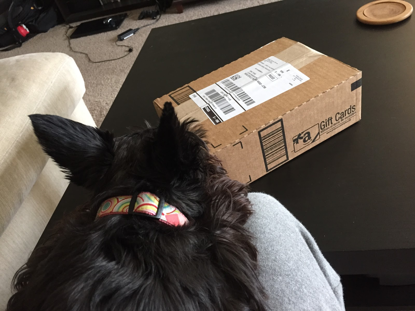 dog and brown package