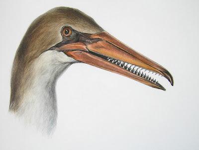 Resultado de imagen para El ave con pico más antigua