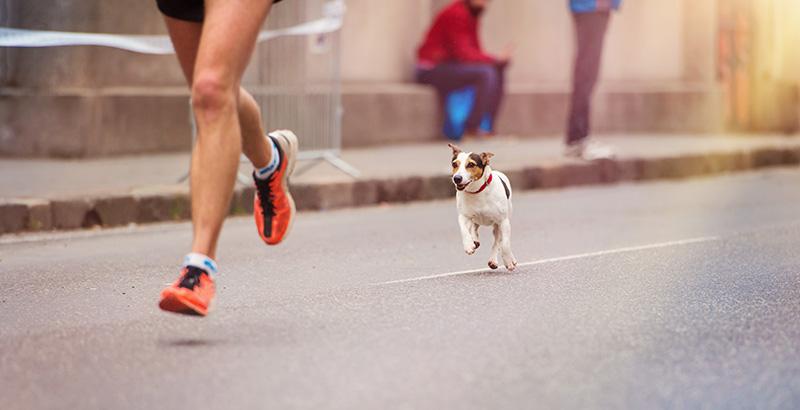 Courir avec son chien, un tandem insolite
