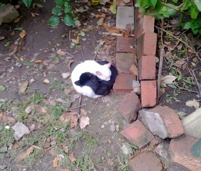 Yin-And-Yang-Cats