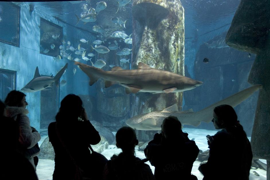 Tubarões Sea Life em Londres