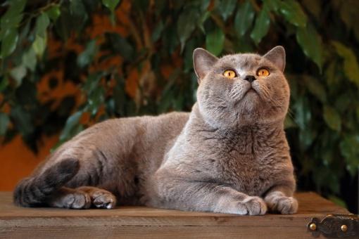 Nauka kota korzystania z kuwety