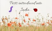 Major pests and diseases introduced into India-1
