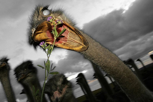 Popular Girl Wallpapers Funny Ostriches Pictures Funny Animals