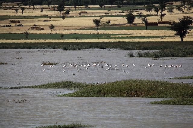the swamplands near Debre Zeyit