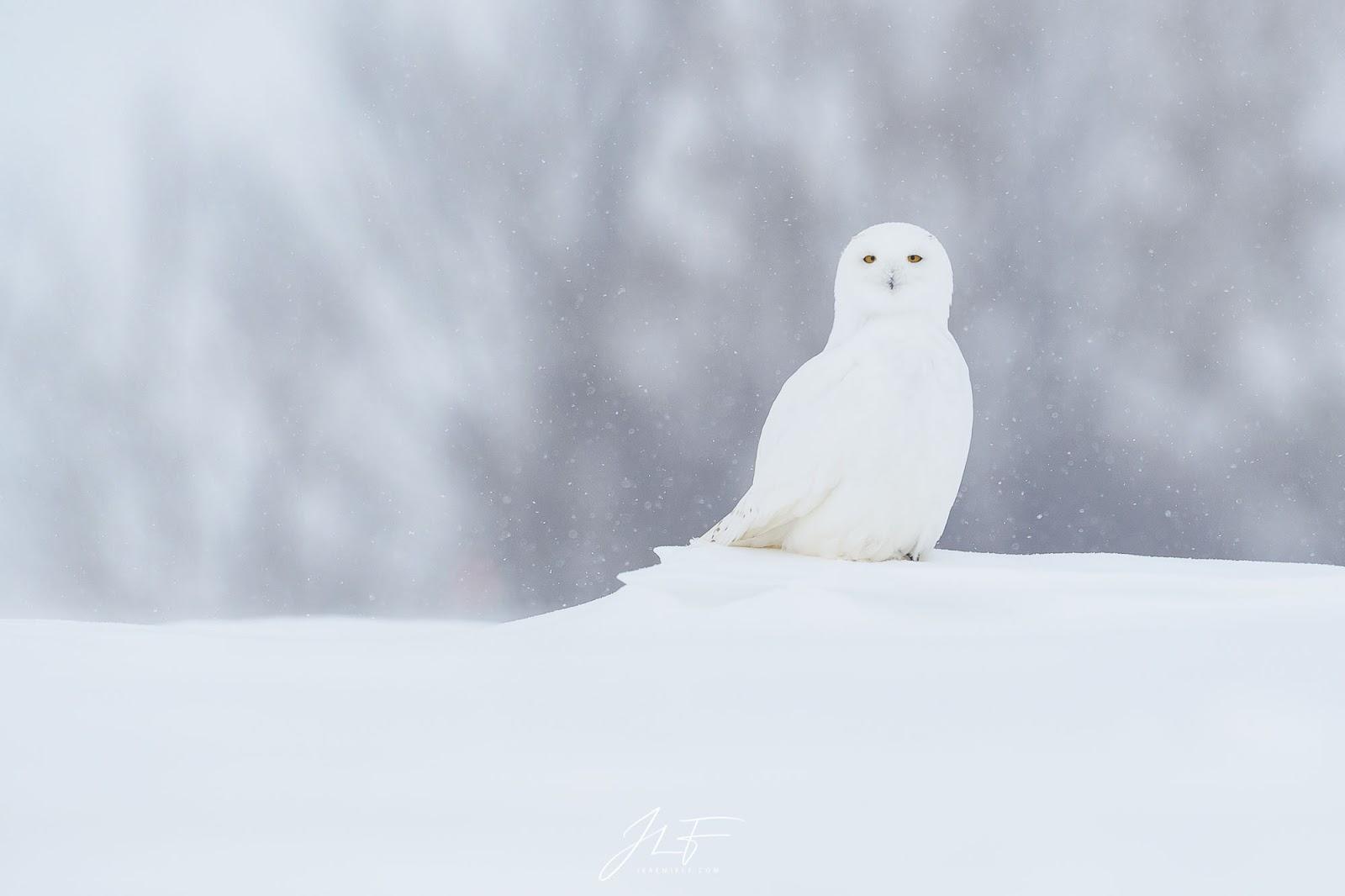 Neige blanc vidГ©o de sexe