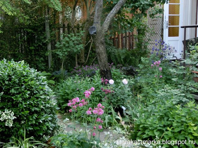 starakalamarka, дом в Венгрии, Будапешт, Венгрия, стара каламарка, сад и огород