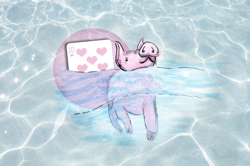 KuneCoco • 10 Fakten über die Bahamas-Schweine