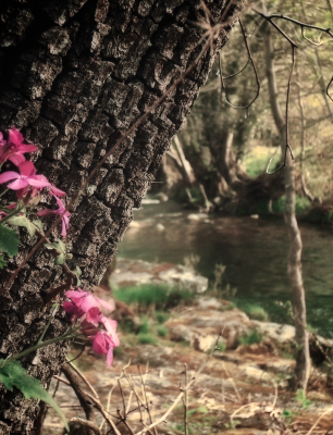 bosque y agua