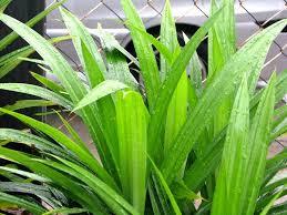 Image Gunakan herbal disekitar pekarang untuk membersihkan kewanitaan