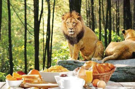 Breakfast With Lion