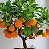 Top 10 fruit tree images, greeting, pictures for whatsapp - bestwishespics