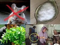 Begini Cara Ampuh Basmi Tikus Bandel, Dijamin Kapok dan Tak Balik Lagi Ke Rumah