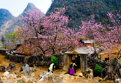 Spring in Ha Giang