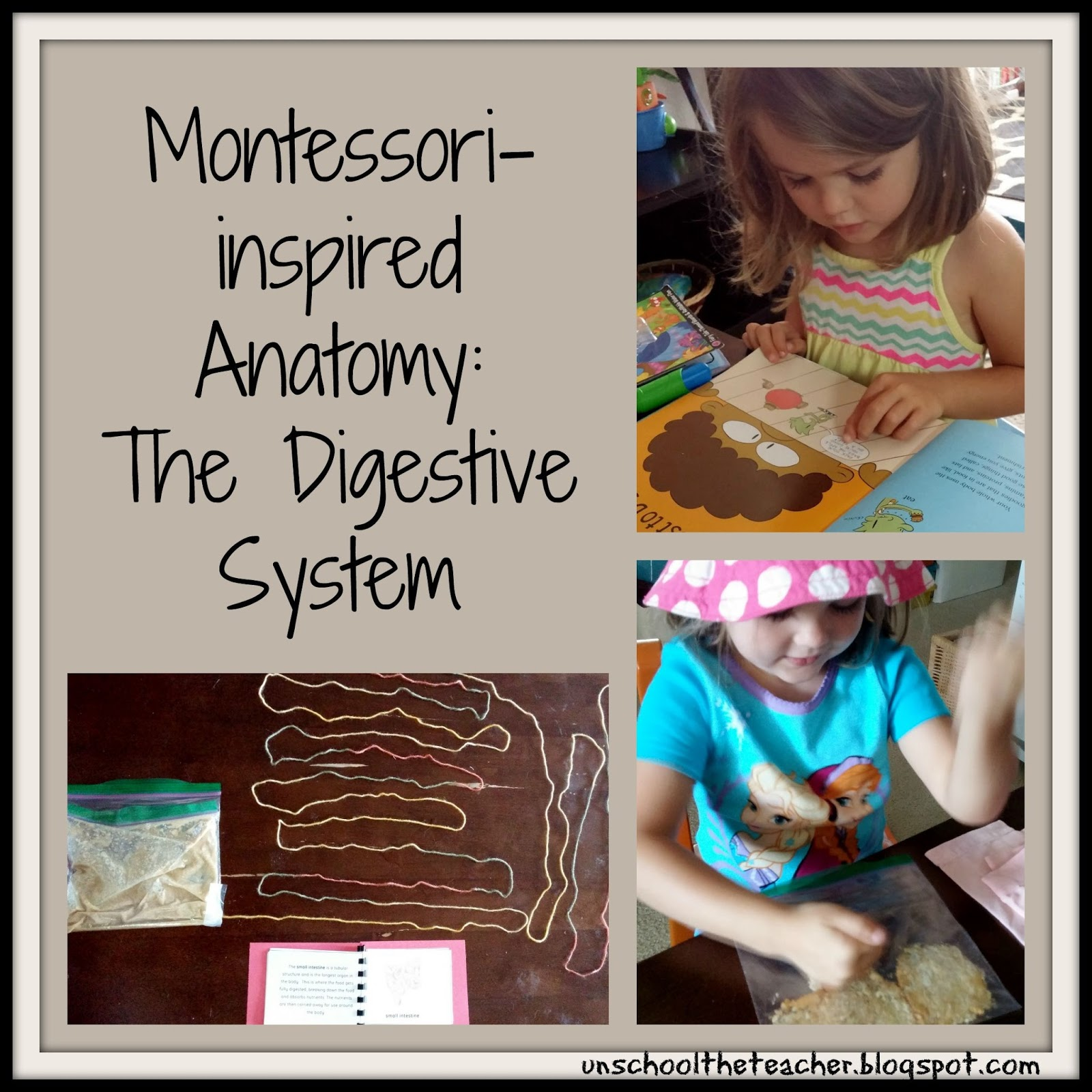 Unschool The Teacher The Digestive System For Kids