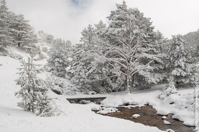 Ruta raquetas nieve Madrid Arroyo Guarramillas senderismo