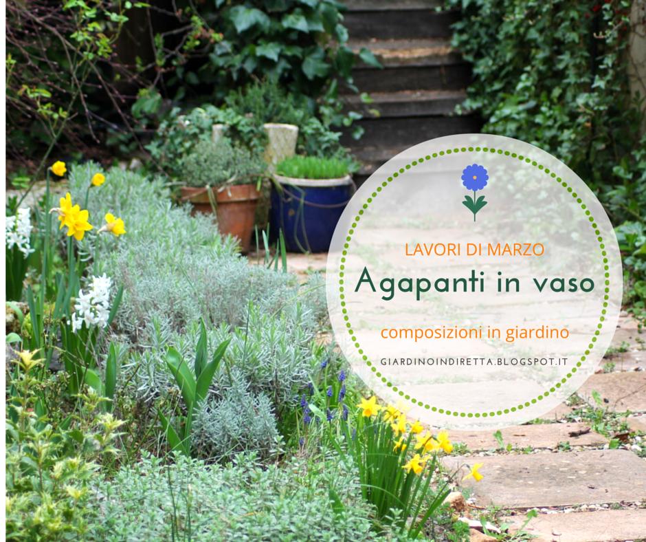 Lavori di marzo in giardino agapanti in vaso un - Lavori in giardino ...