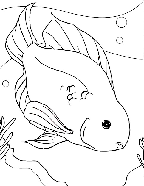 Coloring Page Of Fish