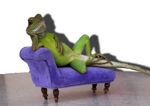 Redshirt S Lament Casting Couch Slither Reptillian Version