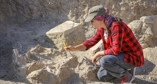 2800 year old horse skeleton discovered in eastern Turkey