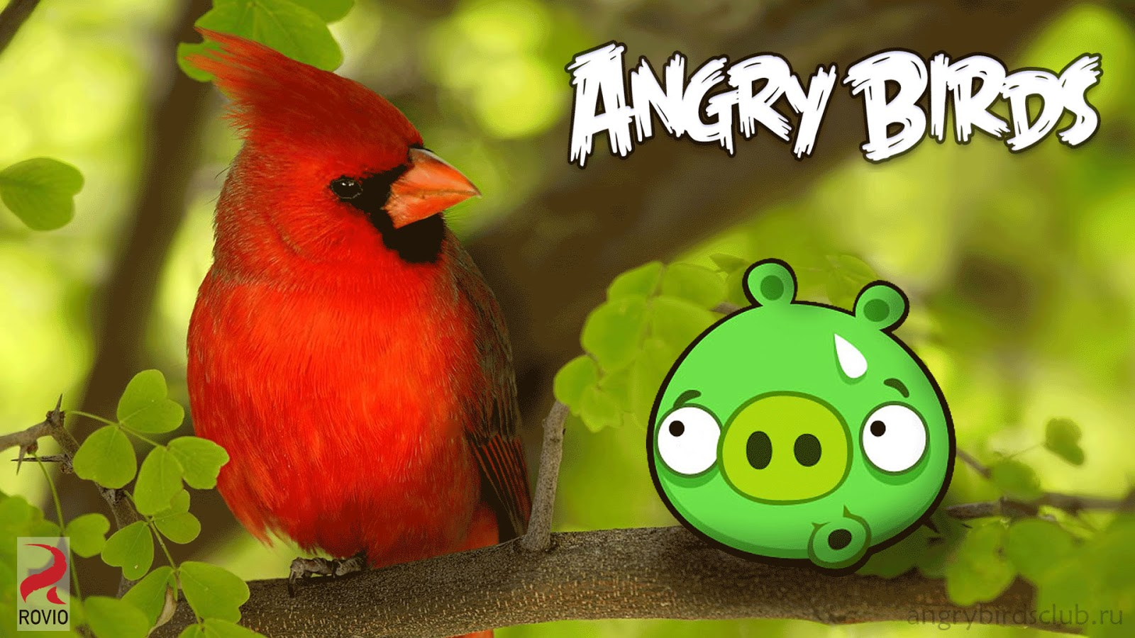 Angrybirds Francescanatale 05: 3D HD WALLPAPERS: ANGRY BIRDS WALLPAPERS