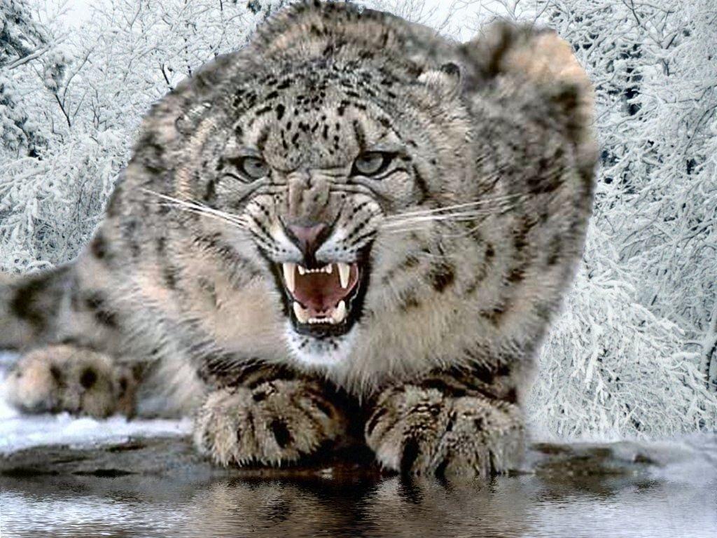 Mark Blog: Snow Leopard
