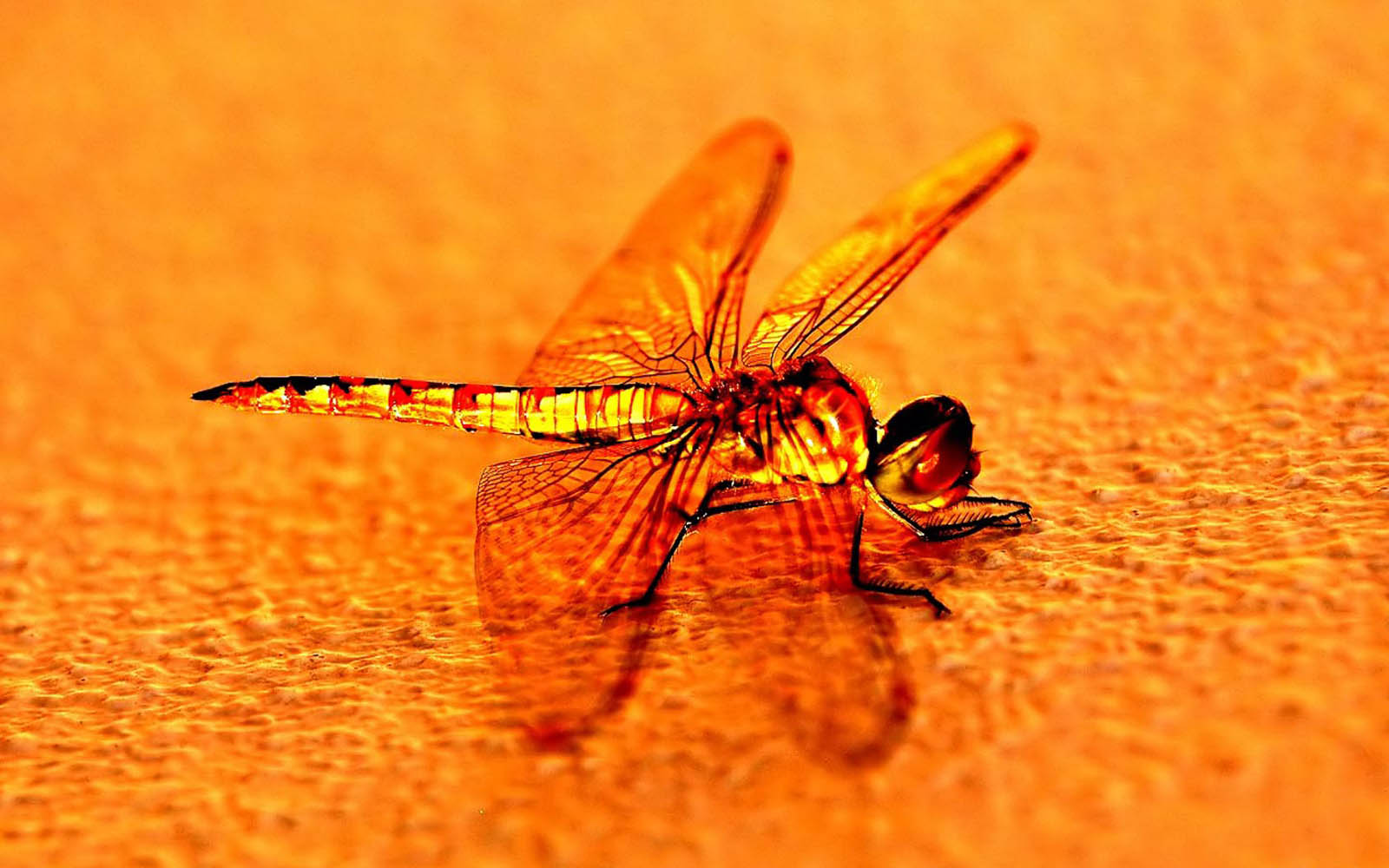 7 Horse Wallpaper 3d Wallpapers Dragonfly Wallpapers