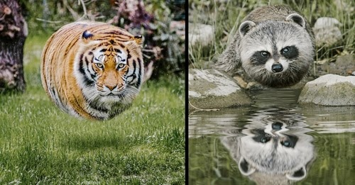 00-Aditya-Aryanto-Surreal-Animals-Ball-Photo-Manipulations-www-designstack-co