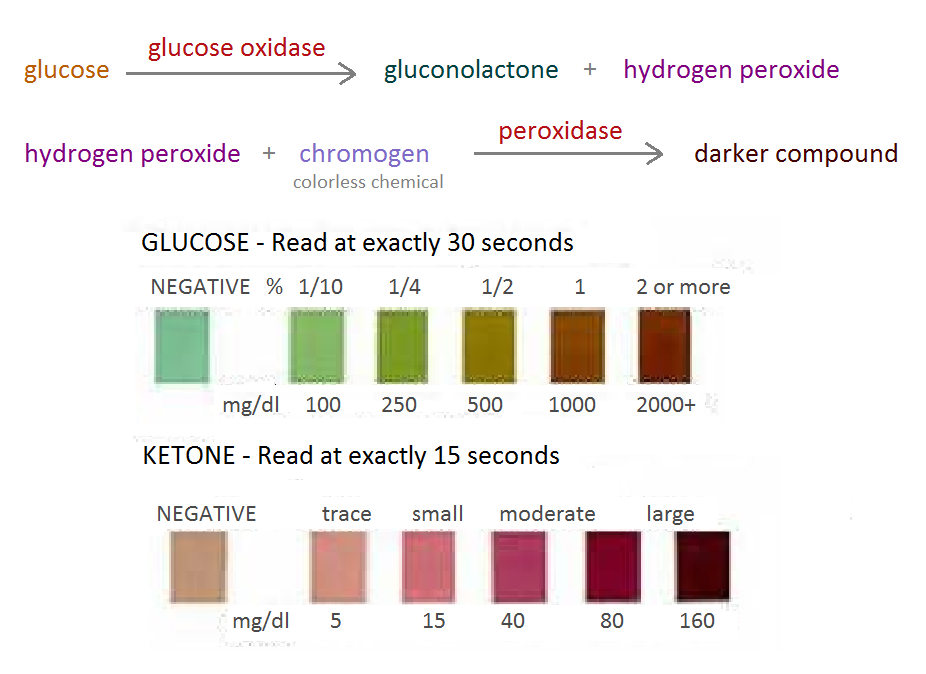 urine glucose and blood relationship
