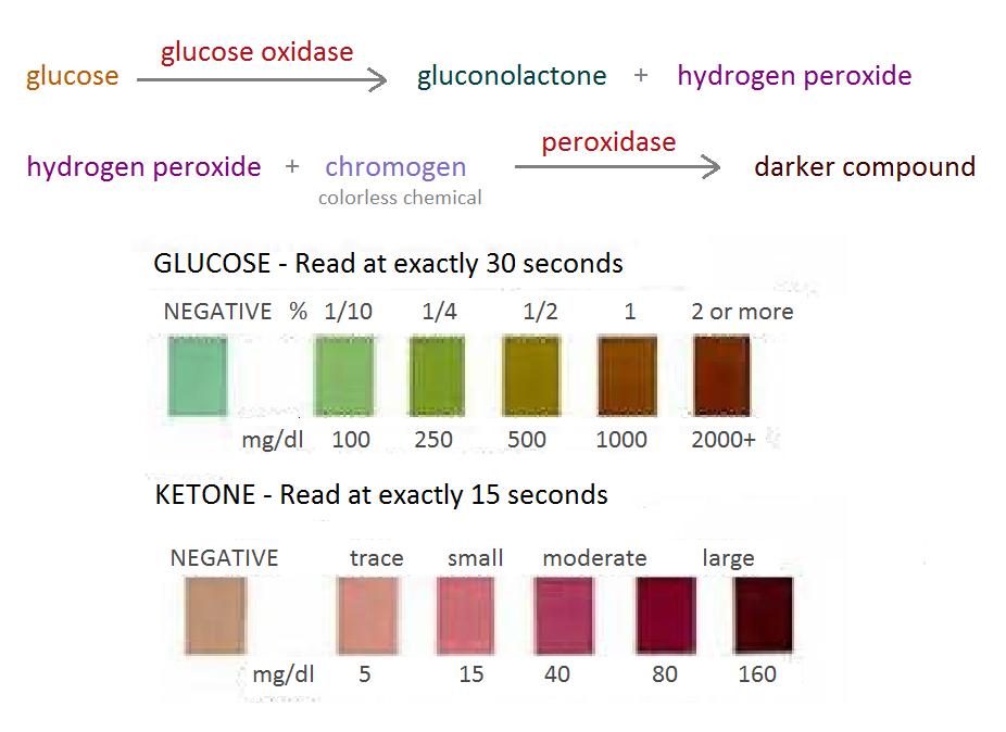 sugar level urine testing strips jpg 1200x900
