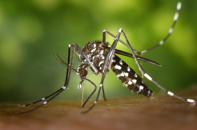 Maladies transmises par le moustique tigre et les autres