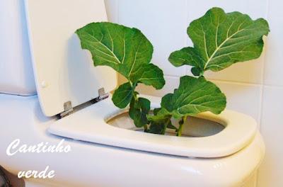 Urina usada como fertilizante na agricultura