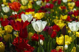Co zrobić gdy nasze kwiaty zwiędły?