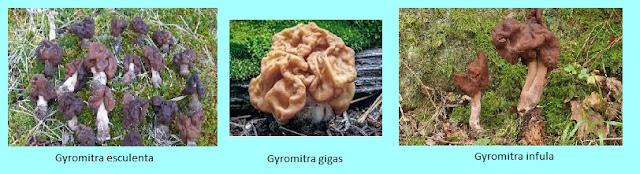 imágenes setas que provocan sindrome giromítrico