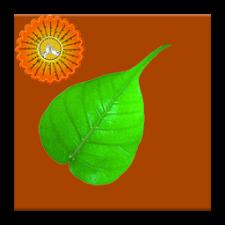 ဆရာေတာ္ၾကီး( ၇ )ပါးရဲ့ တရားစု စကားစု ၾသဝါဒမ်ားကိုေကာက္နဳတ္စုစည္းထားတဲ႔  Application