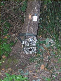 Cámaras de foto trampeo, para evaluación de depredadores