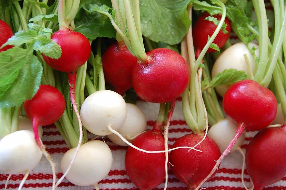 فوائد الفجل الاحمر والابيض، 10 فوائد مذهلة ستجعلك تأكله يومياً! radish.jpg