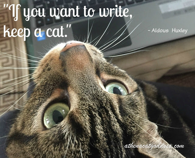 cats and writing