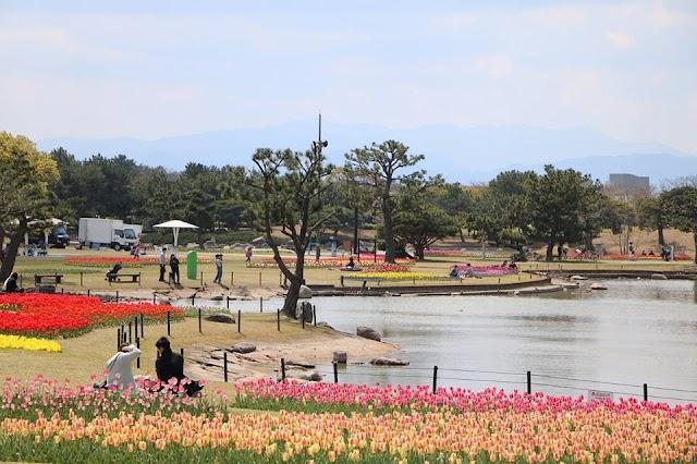 【福岡】絕美花海春暖盛放 海之中道海濱公園
