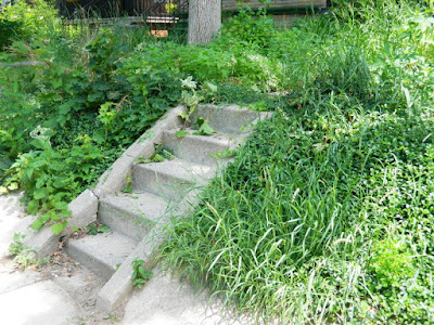 Palmerston Toronto Front Garden Clean up before by Paul Jung Gardening Services