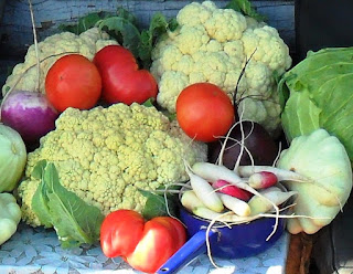 Вовремя посеянные овощи хорошо растут и завязывают отличные плоды