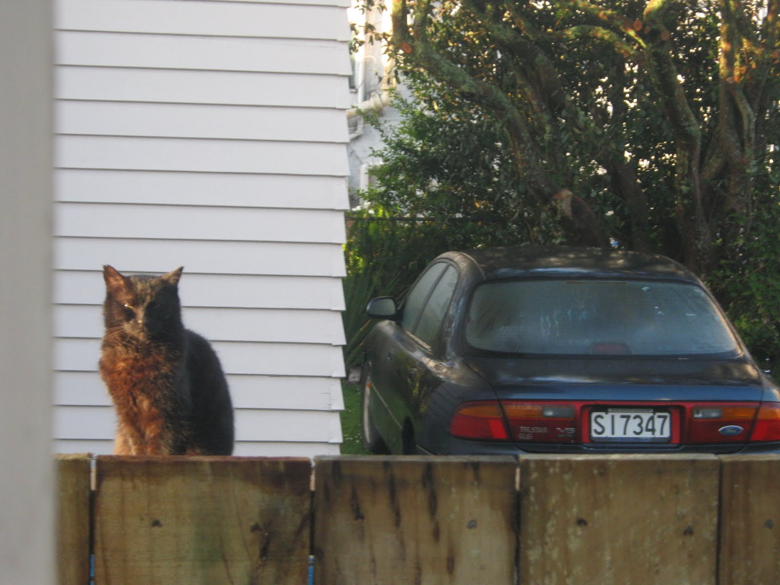 Neighbor S Cat Scratched My Car