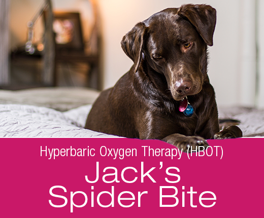 Hyperbaric Oxygen Therapy (HBOT): Jack's Spider Bite