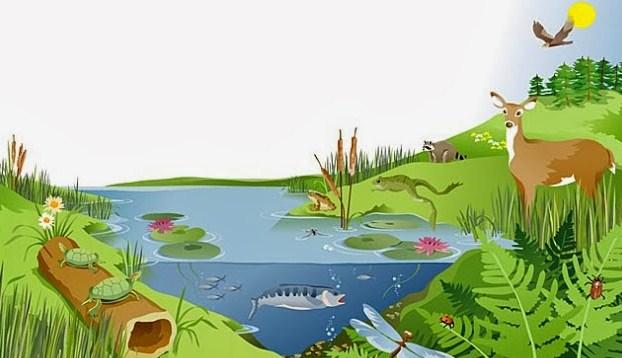 Mengenal Istilah dalam Ekosistem