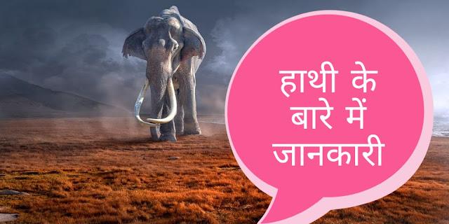 हाथियों की कुल कितनी प्रजातियां हैं?   हाथी की सभी प्रजातियो के बारे में जानकारी