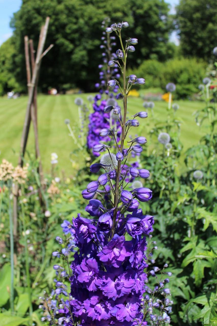 Blue flowers at Basildon Park