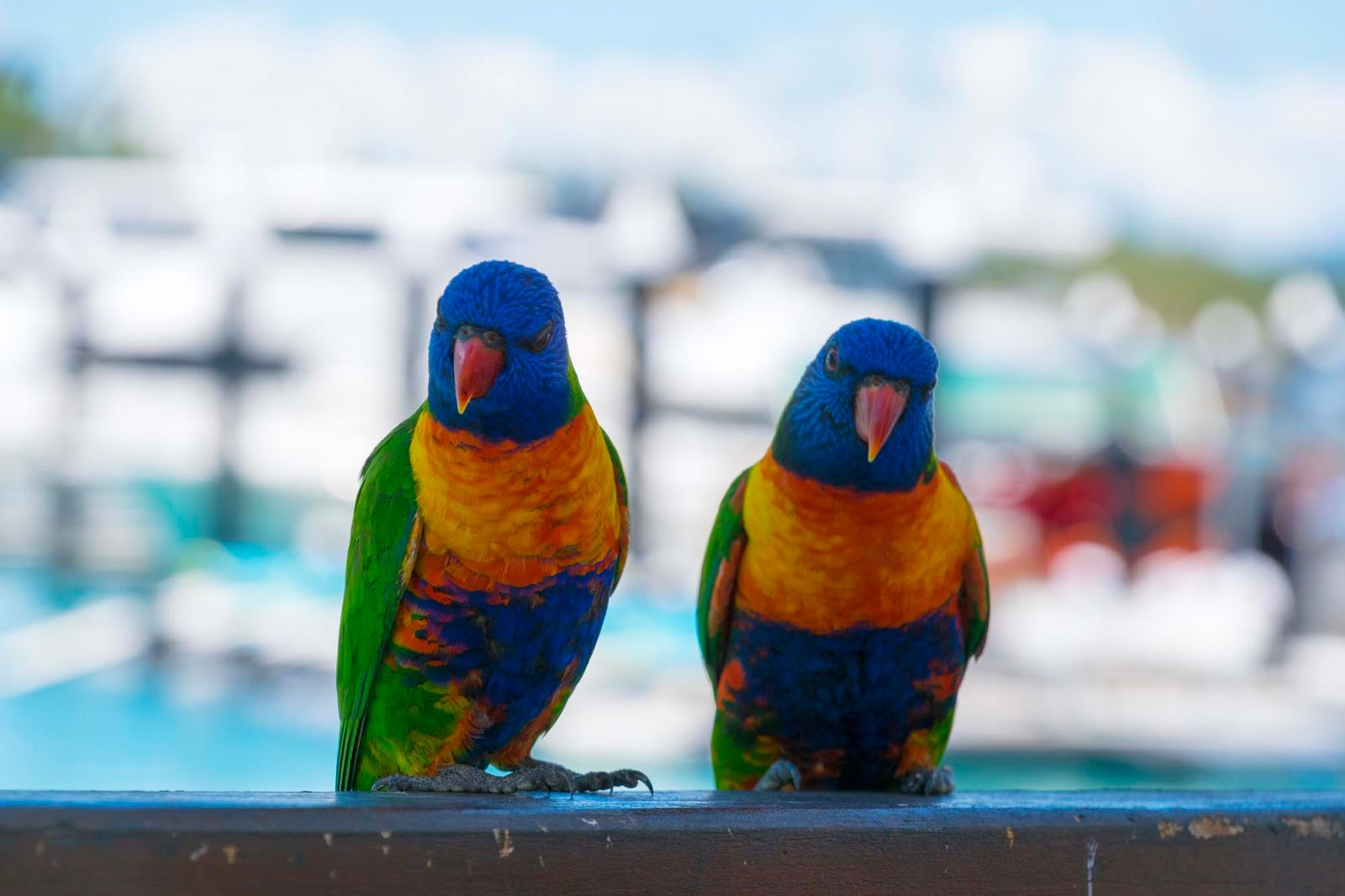 pretty birds on hamilton island