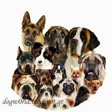b24dc65eba7a Συμβουλές για την επιλογή της ράτσας σκύλου