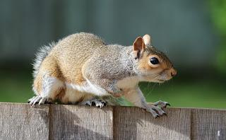 Dengan adanya rantai makanan maka dapat kita ketahui termasuk jenis apakah hewan tersebut Ciri dan Contoh Hewan Karnivora, Omnivora, Insektivora