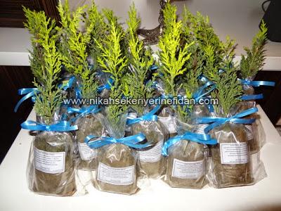nikah fidanı nikah bitkisi fiyatları 1